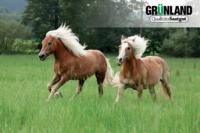 Pferdemischungen