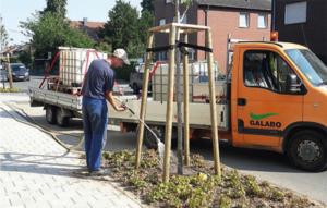 Dünger Baumpflege