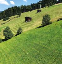 Grüne Weide