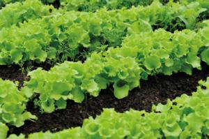 Pflanzen- und Bodenverbesserer