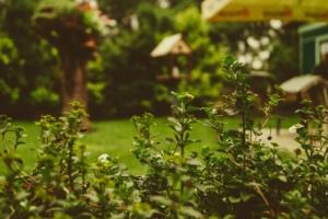 Pflanzenschutz für den Gartenbau