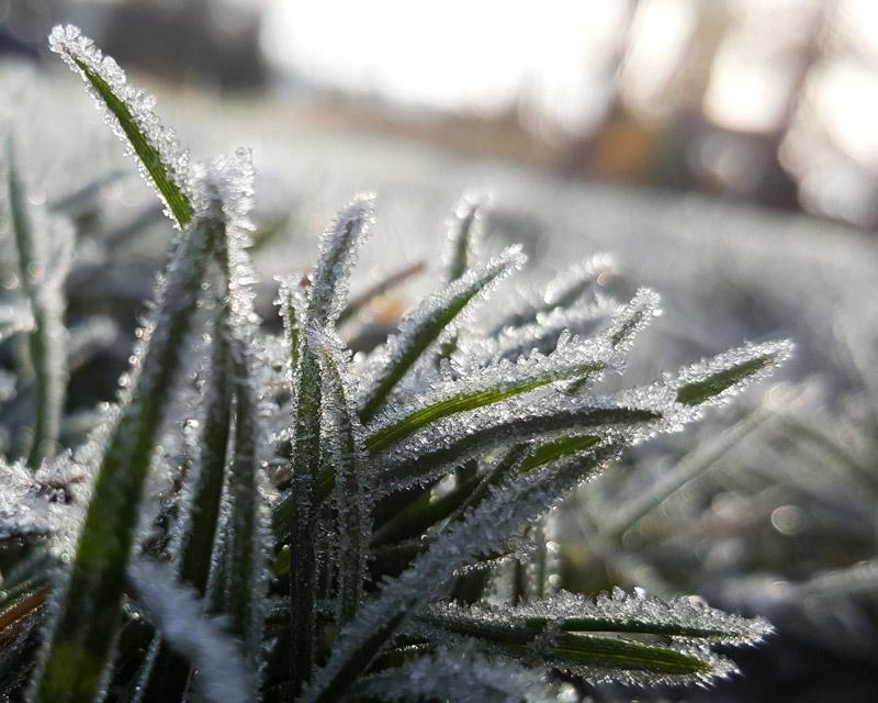 SR 085 Wintergrün PERUN