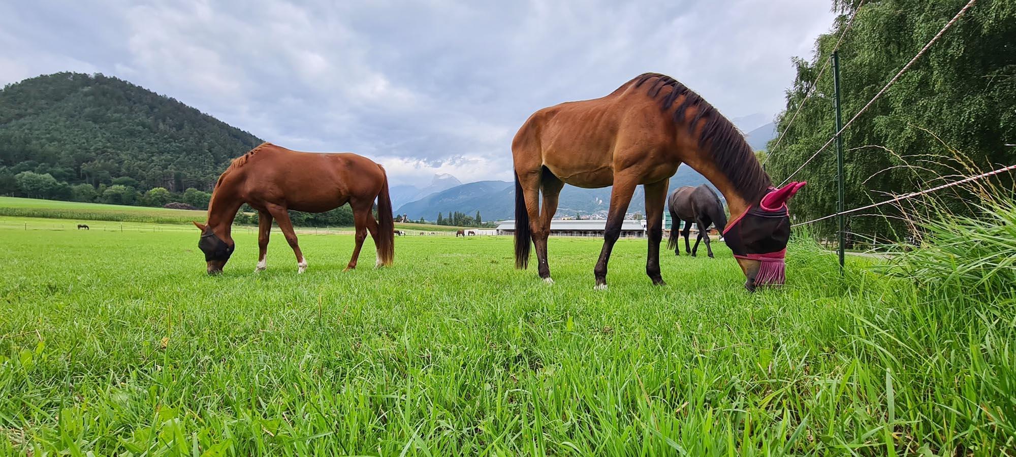 Saatgut für Pferdeweiden kaufen